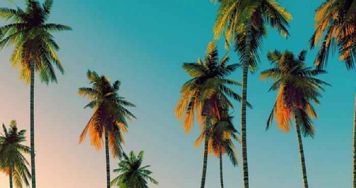 tendenze-2016-lo-stile-tropicale (3)